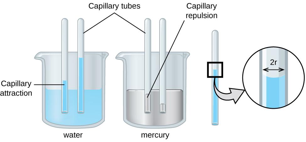 Capilarytubeeffect_หลักการทำงานของการแทรกซึม